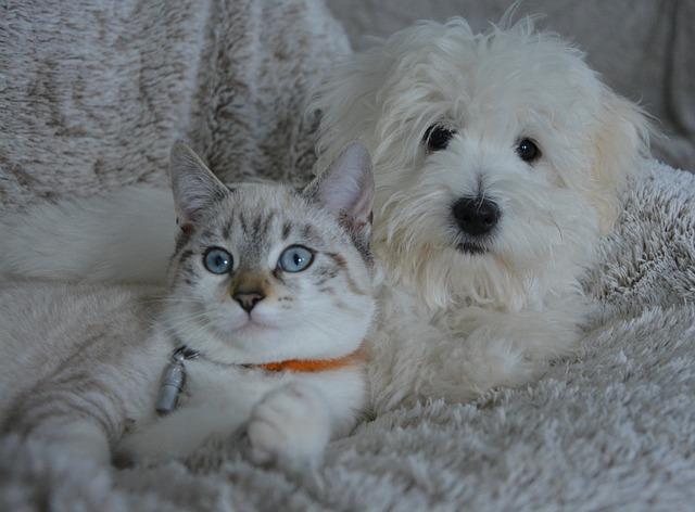 Mangimi cane gatto online